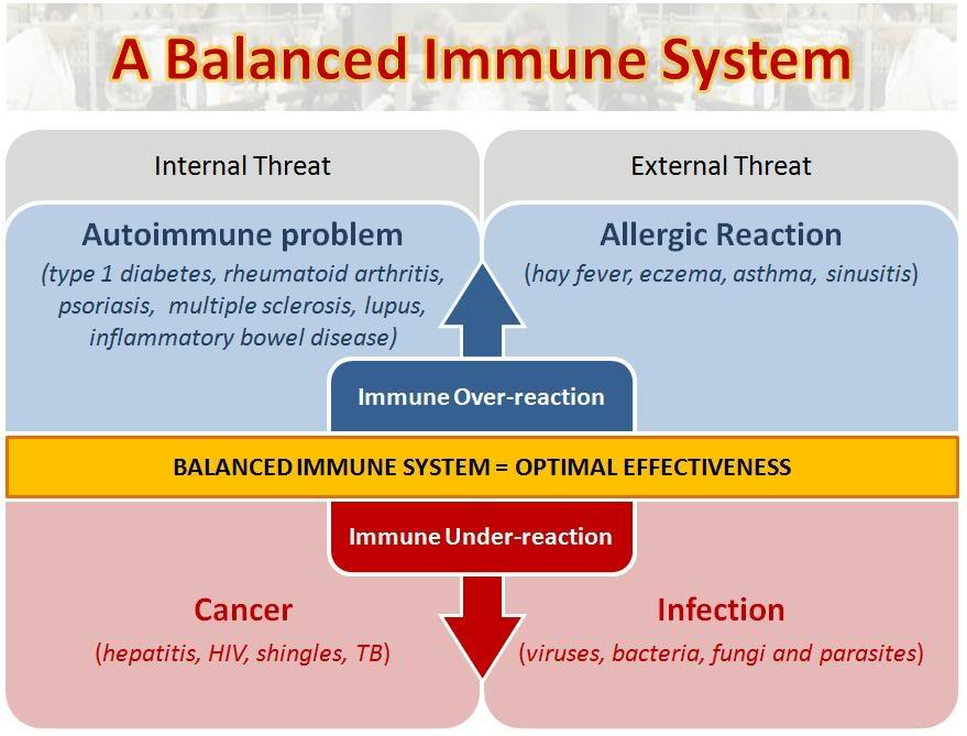 Immune System Human Body Systems